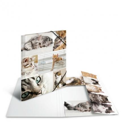 Kartonmappe A4, Katzen